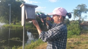 Trish O'Kane makes sure three Bluebird boxes installed along Warner Pond near the Tin Can Shelter are sturdy and ready for use next year.  The boxes may also attract Bluebirds, Tree Swallows, House Wrens and Black-capped Chicadees making 2nd or 3rd nests this year. This year O'Kane, Paul Noeldner, Tim Nelson and Jonathan Santanna have recorded successful Bluebird families this year.