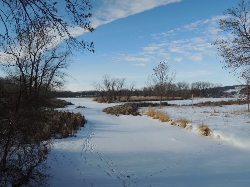 The wetland behind the dog park. The ice is safe now to walk around Warner's wetland. (Lorraine Bose)