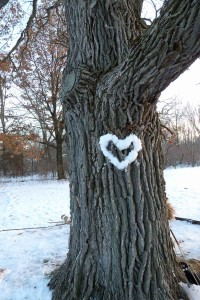 """Students """"painted"""" the Bur Oak with a snow heart for Valentine's Day (Jack Kloppenburg)"""